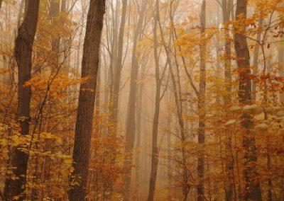 autumn-trees-mist-dogs