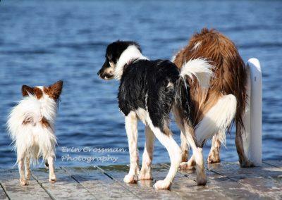 dock-dogs-swim