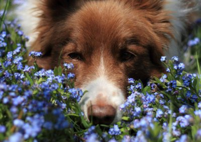 dog-zephyr-flowers-portrait