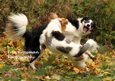 dogs-play-fun-action