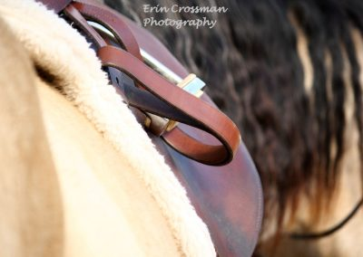 english-saddle-horse