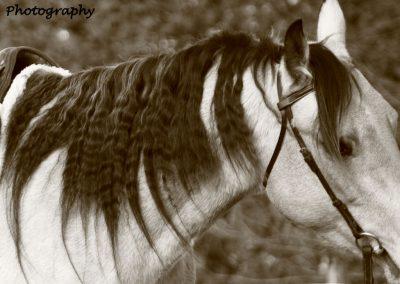 horse-mane-sepia
