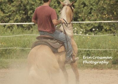 horse-reining-slide