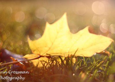leaf-rain-grass