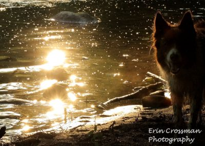 water-light-dog