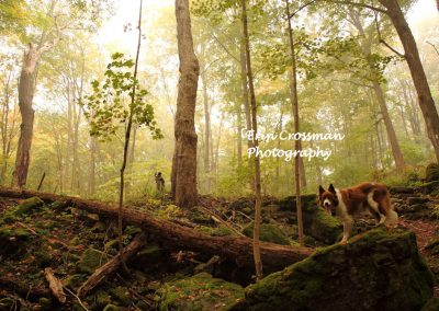 woods-fog-dogs