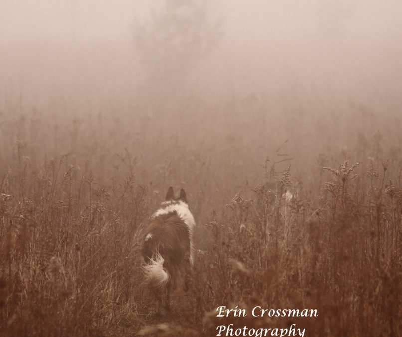 Dogs In The Fog