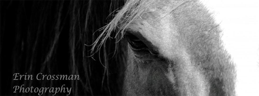 Erin Crossman Horses