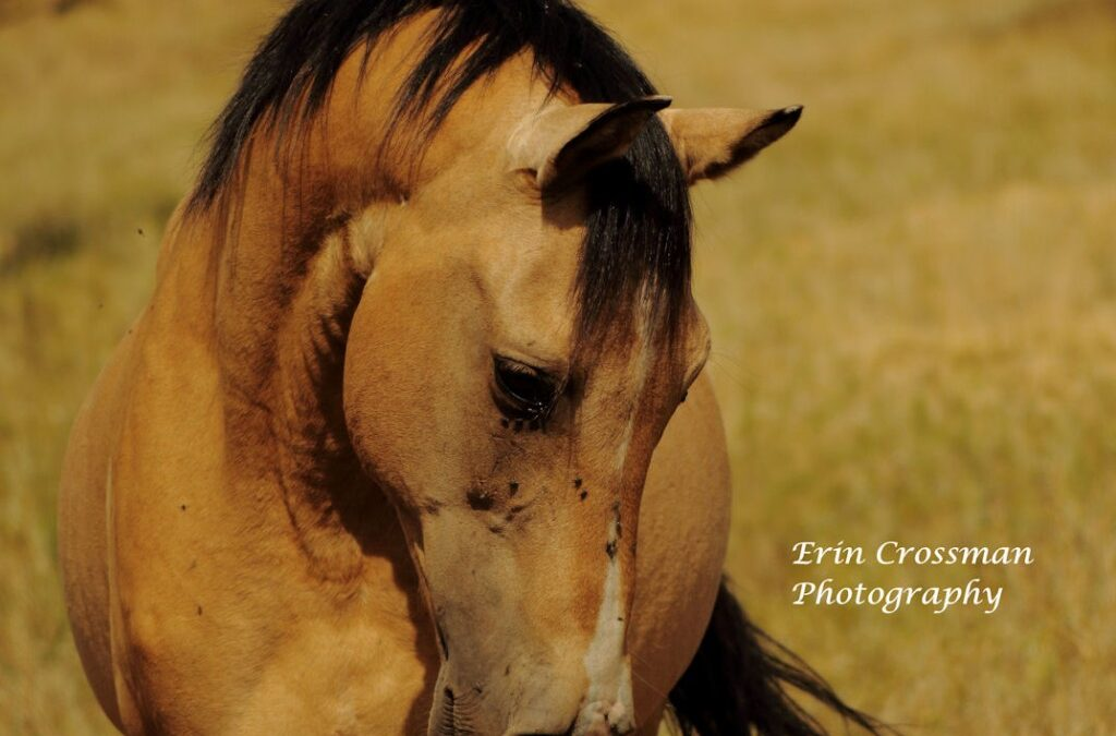 The Wild Horse Sanctuary
